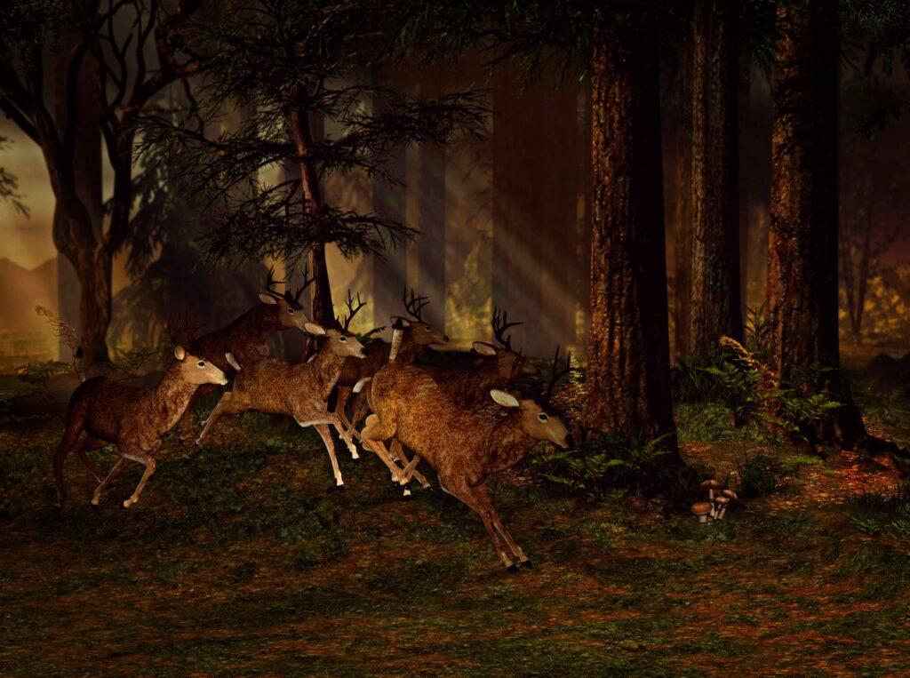 silencerco radius rangefinder night hunt