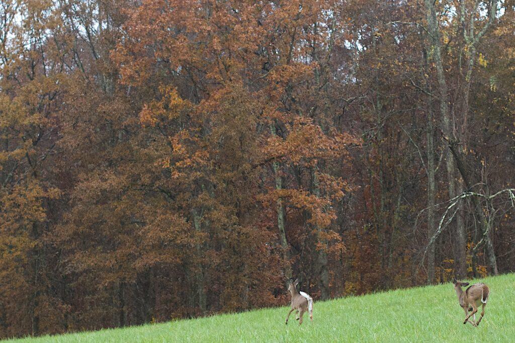 redfield raider deer finder